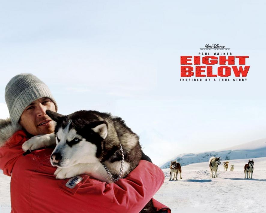 Watch War Dogs Online Movies