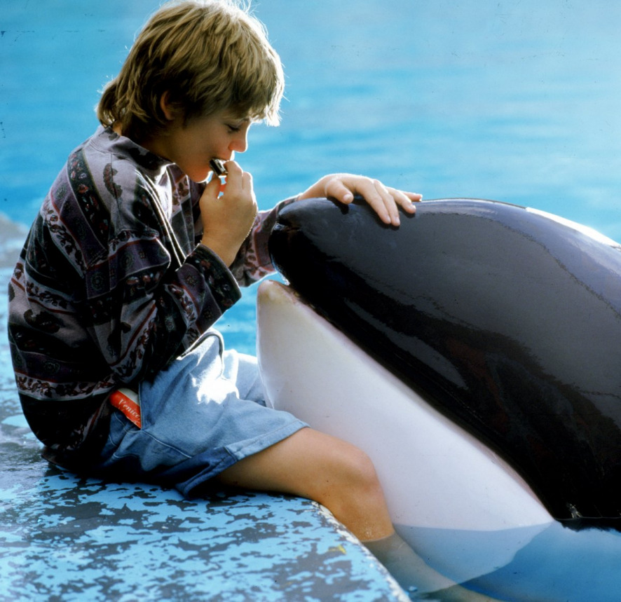 watch free willy for free online 123moviescom