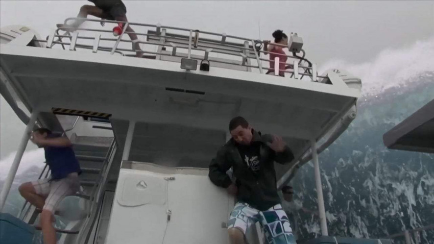 Watch open water 3 cage dive for free online - Open water 3 cage dive ...